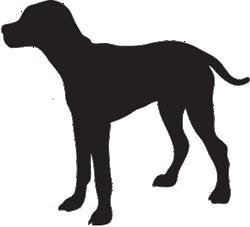adiestradora-de-perros-en-lima