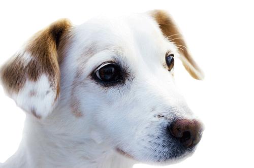 adiestradores de perros en Lima